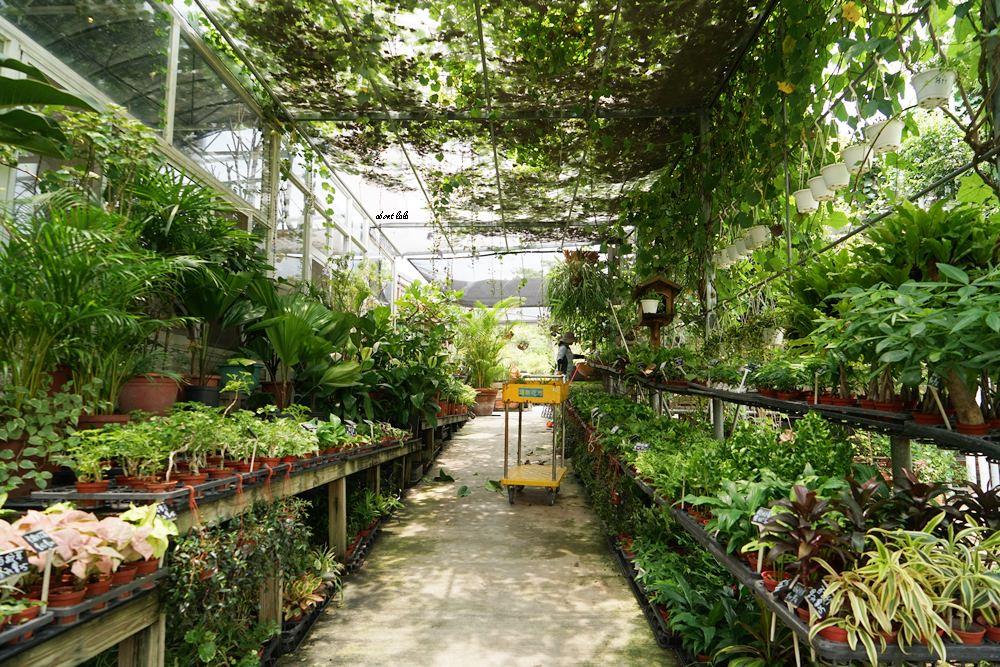 20170608114729 61 - [熱血採訪]山姆派樂 溫室花園般的漂亮景觀餐廳 咖哩飯好吃 甜點平價 自家烘焙咖啡好喝